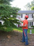 Tree Removal Affordable FREE Estimates