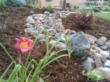 EDI Landscaping and Mainance