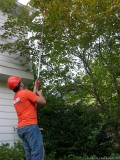Certified Arborist Tree Spraying and Tree Fertilization
