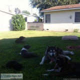 Dog Walking ( individually with a pack) Pet Sitting