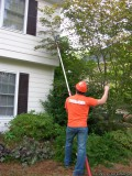 Affordable Tree Care Services FREE ESTIMATES