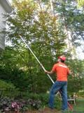 Tree Care Services Certified Arborist