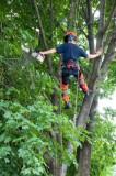Tree Trimming Services- Suwanee Georgia- Free Estimates