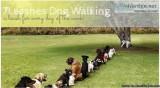 Leashes Dog Walking - Redlands CA