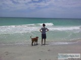 Pet Play-Cation Pet Sitting Sarasota Venice FL