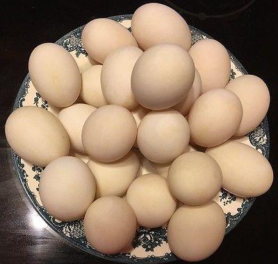12 Organic Free Range, Cage Free Duck Eggs