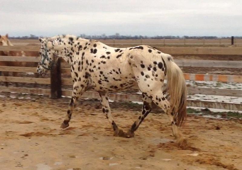 Nice all around horse