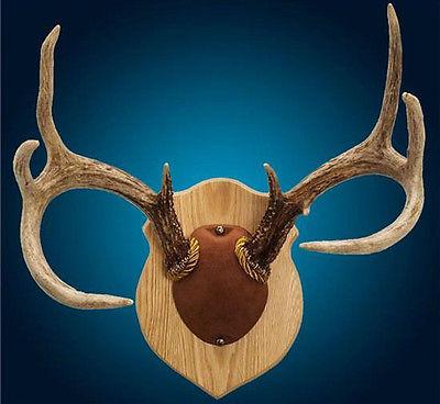 Deer Mount Kit - For Sale Classifieds