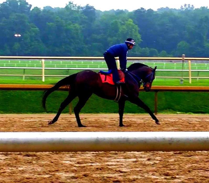 Majestic Warrior stallion prospect Loc near Laurel Park MD
