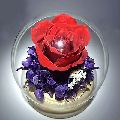 Valentine's Gift Rose  Preserved Rose, Glass Cover, Home Decor, Gift