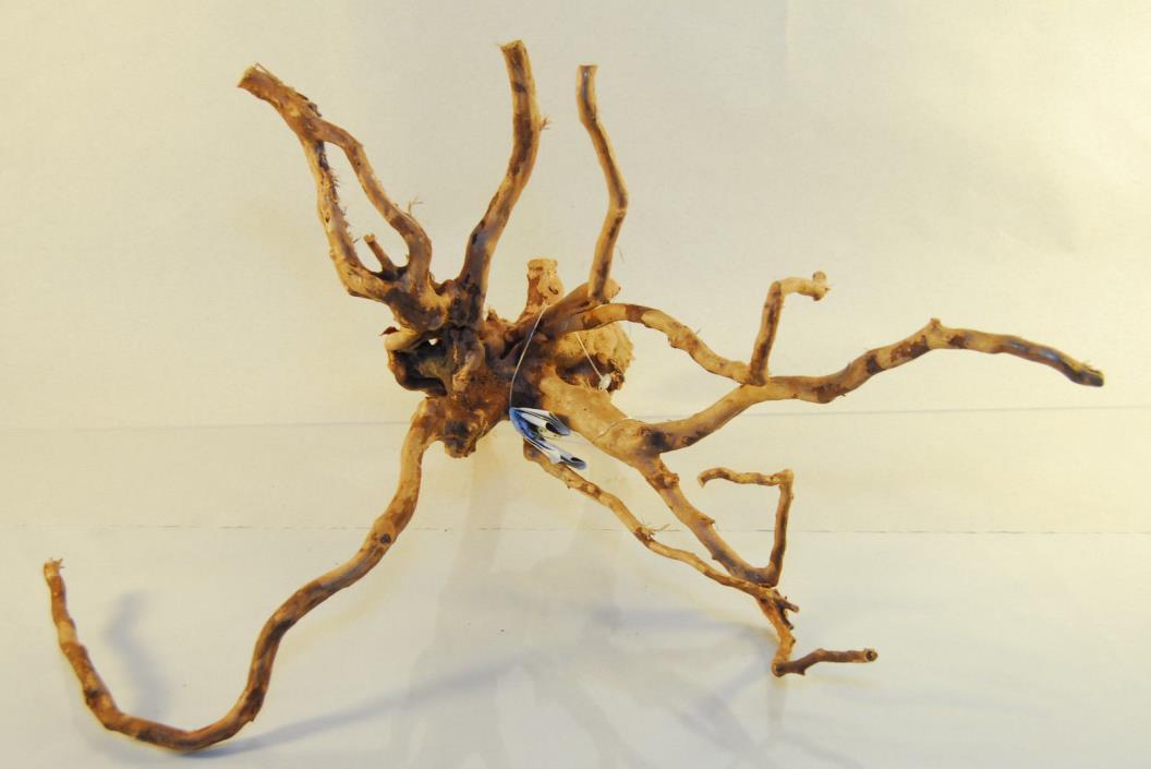 NATURAL SPIDER WOOD DRIFTWOOD #19 16