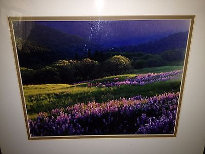 Coldwater Creek Bluebonnets Framed Photograph 11 x 14
