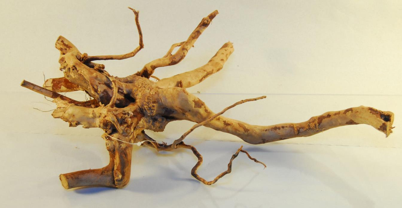 NATURAL SPIDER WOOD DRIFTWOOD #25 16