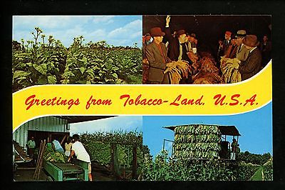 Postcard Greetings from Tobacco Land field farm harvest auction chrome