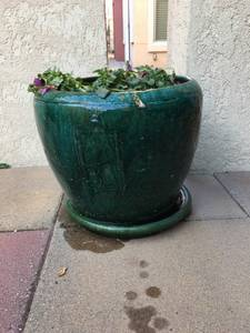 Large Green Patio Pot ($50.00) (Kirkland WA)