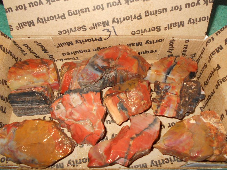 ARIZONA RAINBOW PETRIFIED WOOD ROUGH SLAB /CAB/COLLECT 31