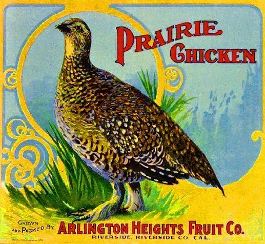 Riverside Arlington Prairie Chicken #2 Orange Citrus Fruit Crate Label Art Print
