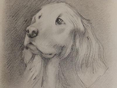 Mid century 'IRISH SETTER' Vintage Dog Drawing
