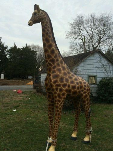 Giraffe Statue LIFE Size 12 Feet Fiberglass