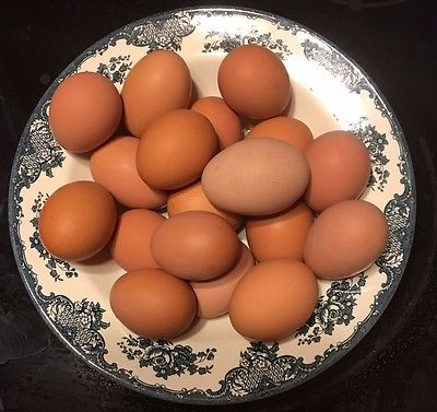 12 Mixed Free Range Cage Free Organic Chicken Eggs Good For Eating