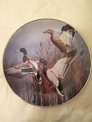 Vintage 1988 Hazy Ascent David Maass Ducks Taking Flight Danbury Mint Plate