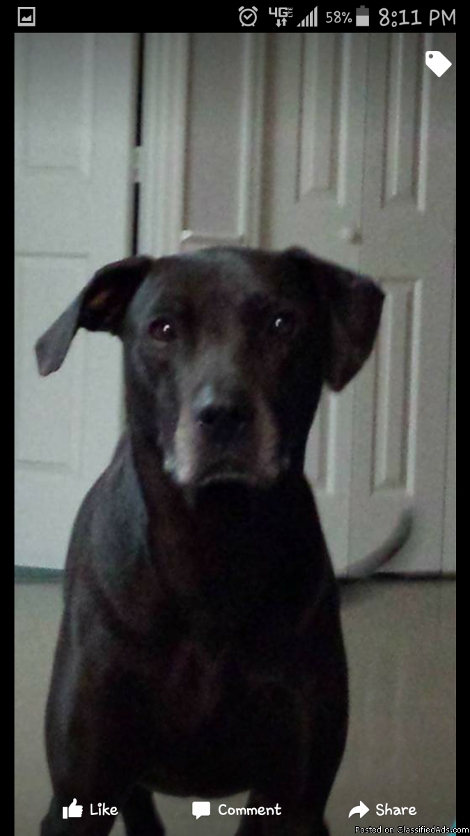 Missing Dog.