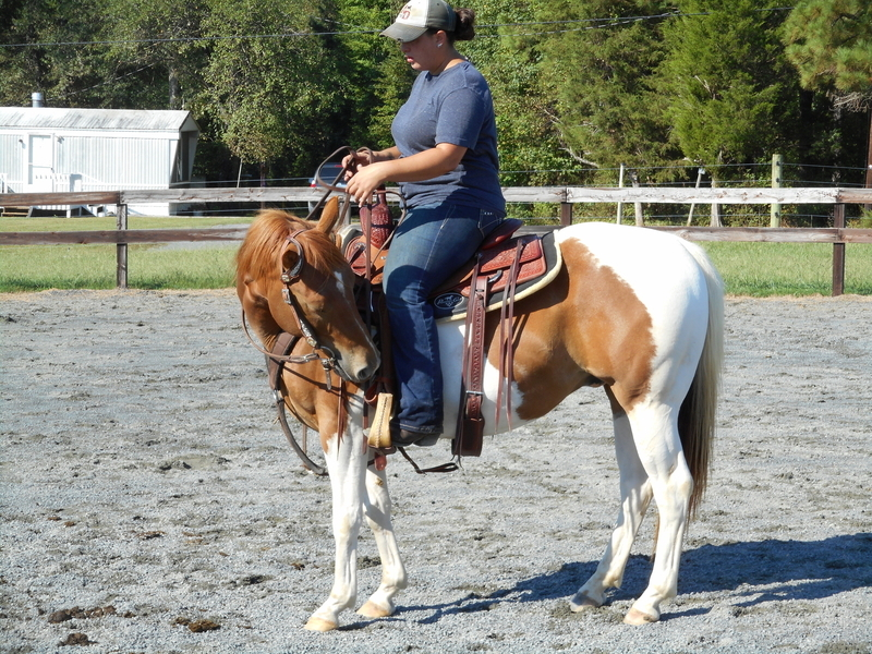 2007 Trail Paint Gelding Available.