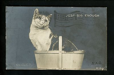 Cat Kitten Vintage postcard cat in basket Photo card 1906