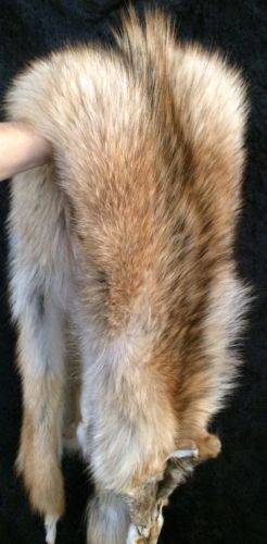 TANNED COYOTE HIDES XXL #1 HUGE!! HEAVY WINTER FUR COAT BRUSH WOLF CABIN DECOR