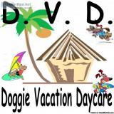 DVD - DOGGIE DAYCARE - Price: . a day