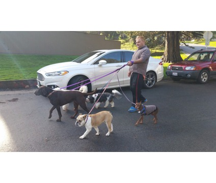 Dog Walking Serviceds