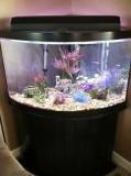 gallon corner fish tank