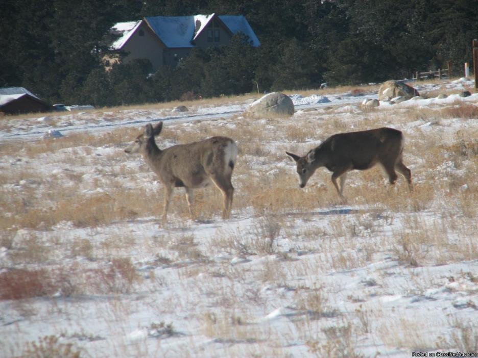 236499 - Abundant wildlife viewing on this ready to build lot!