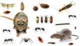 Advanced Pest Control