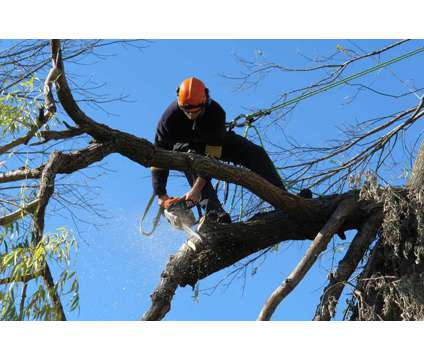 Tree Service All Over Dfw**Affordable Prices and Free Estimates
