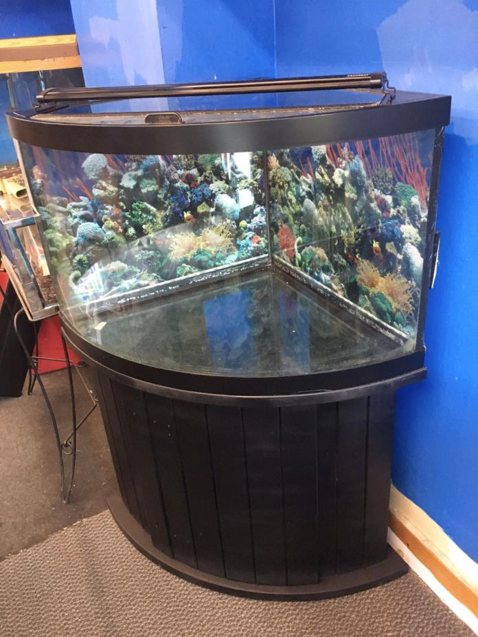 Corner fish tanks for sale classifieds for Corner fish tank for sale