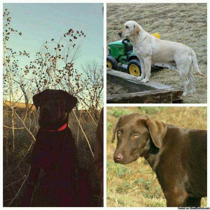 3 Labs Missing