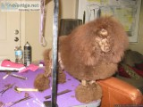 Dog Grooming in N.Richland Hills.