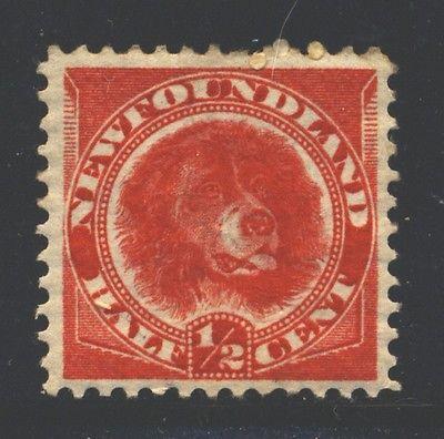 NEWFOUNDLAND Sc56 SG62 MH 1896-98 1/2c ver Newfoundland Dog SCV$10