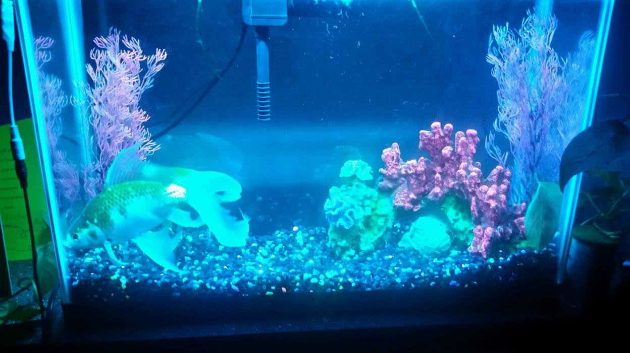 Pink fish tank for sale classifieds for Pink fish tank