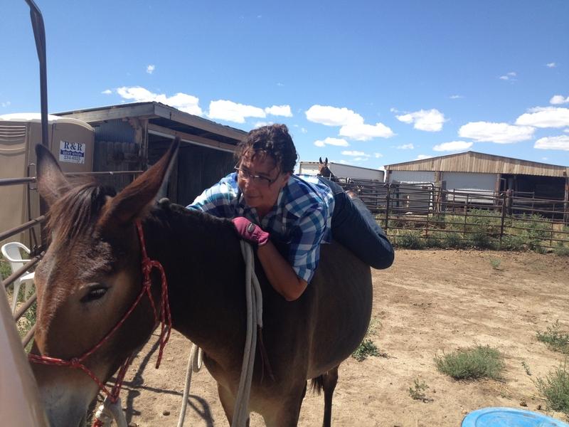 Belle, molly mule
