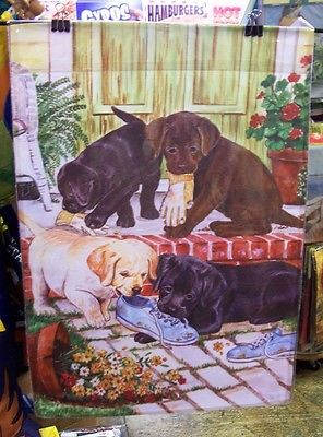 Mischievous Labrador Puppies chewing shoes, Dogs playing, HOUSE flag