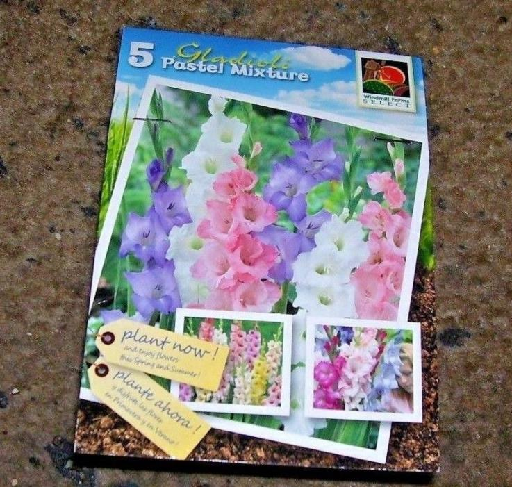 WINDMILL FARMS~HOLLAND FLOWER BULBS~PKG. OF 5 BULBS~GLADIOLUS PASTEL MIXTURE
