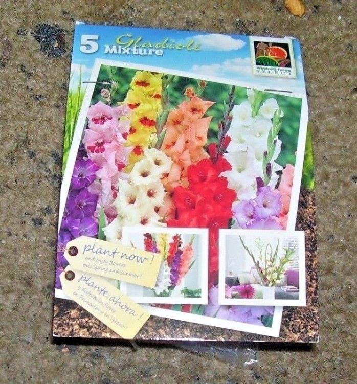 WINDMILL FARMS~HOLLAND FLOWER BULBS~PKG. OF 5 BULBS~GLADIOLUS BRIGHT COLOR