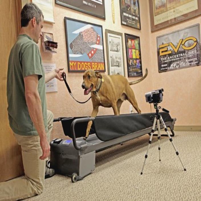 Dog Treadmill PRO Large Tread Wheel pet HEALTH jog exercise indoor outdoor
