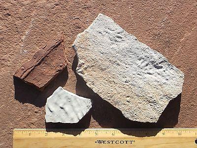 Raindrops, footprints and ripples. El Pueblo early Permian, NM, USA.