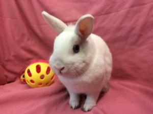 Adopt Flurry a Bunny Rabbit