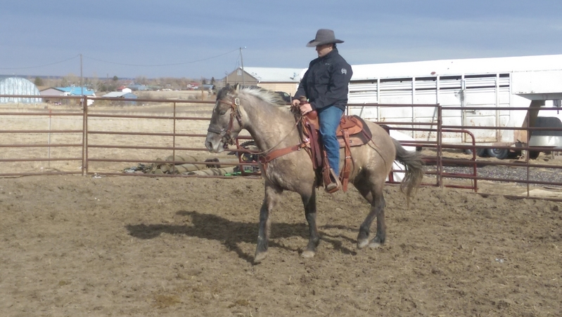 Registered tennessee walker gelding 5years old