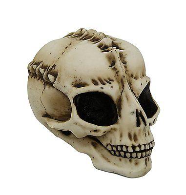 7 Inch Large Eyed Alien Skeleton Skull Resin Statue Figurine
