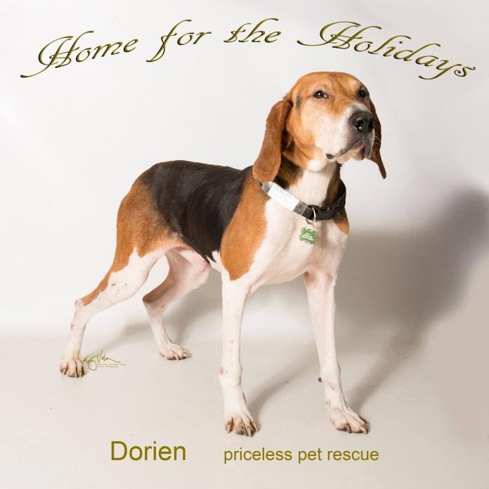 unknown-unknown DOG FOR ADOPTION RGADN-484336 - Dorian - Chino Hills - Coonhound